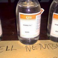 Comprar barbitúrico sódico pentobarbital - comprar Nembutal